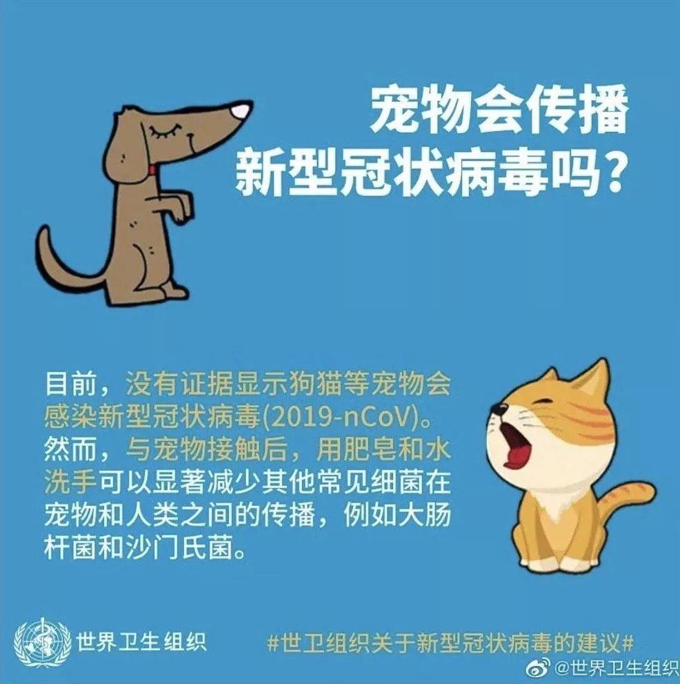 反思教育:喝着双黄连,扔了宠物猫,没得肺炎,却烧坏了大脑