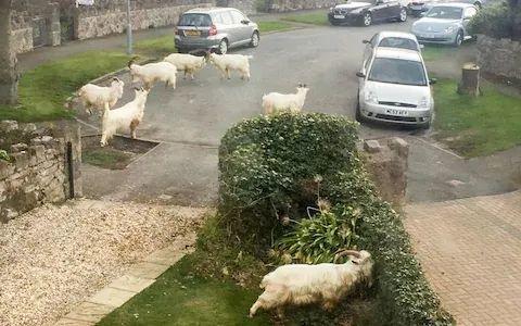 疫情期间威尔士海滨小镇一群野生动物复苏了,相比疫情和核辐射,原来...  疫情相关 第6张