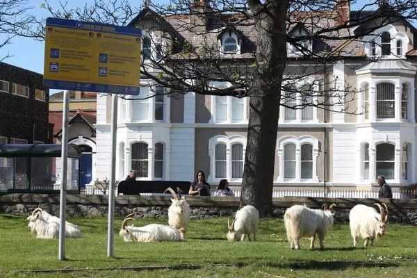 疫情期间威尔士海滨小镇一群野生动物复苏了,相比疫情和核辐射,原来...  疫情相关 第5张