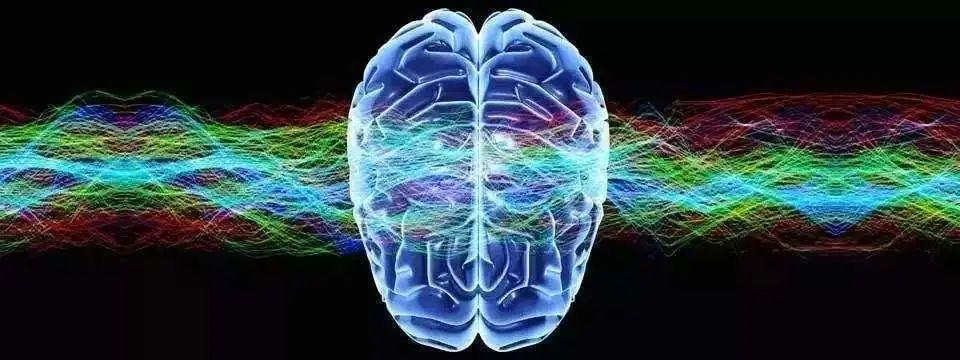深国交学子在含金量极高Brain Bee脑科学国际竞赛上勇创佳绩