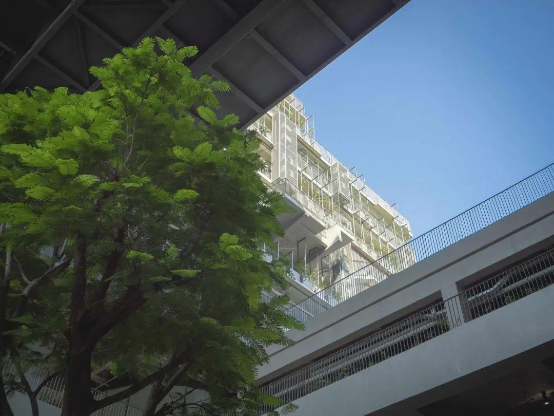 深国交安托山新校园摄影大赛 -- 发现新校园的美(多图)  深国交 深圳国际交流学院 学在国交 第43张