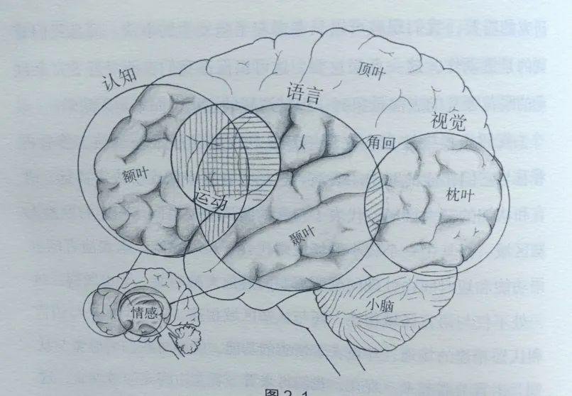 脑科学最新研究:整天刷手机的孩子也许真的不会怎样读书了  第2张